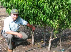 Backyard Orchard Culture, High Density Planting